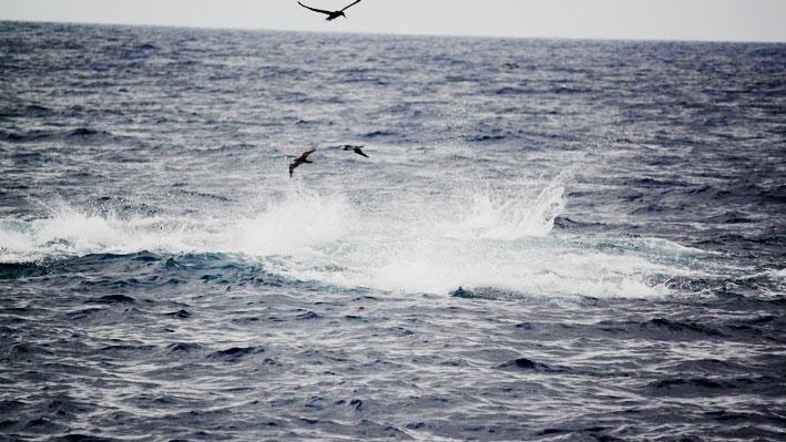 charter-fishing-in-nuevo-vallarta