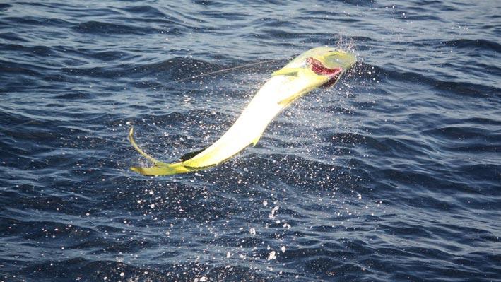puerto-vallarta-sport-fishing