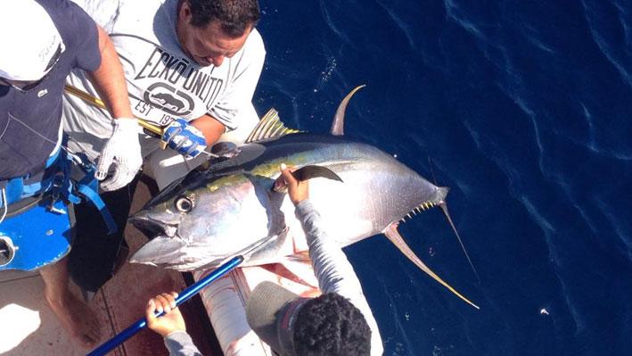 fish-species-puerto-vallarta