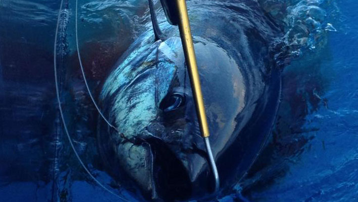 fishing-in-puerto-vallarta