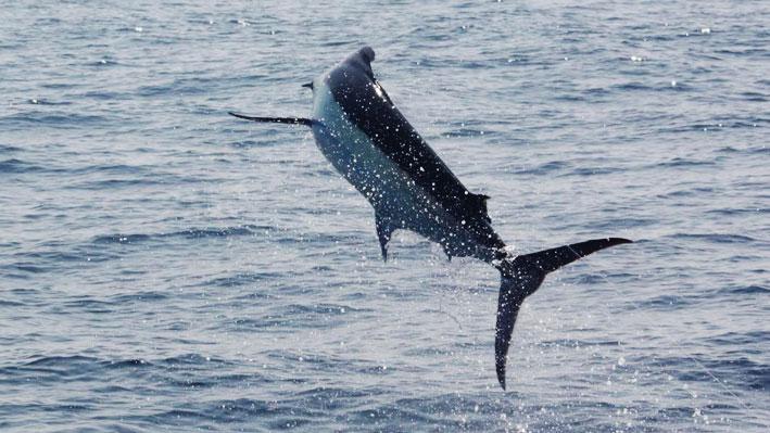 nuevo-vallarta-sport-fishing-charters