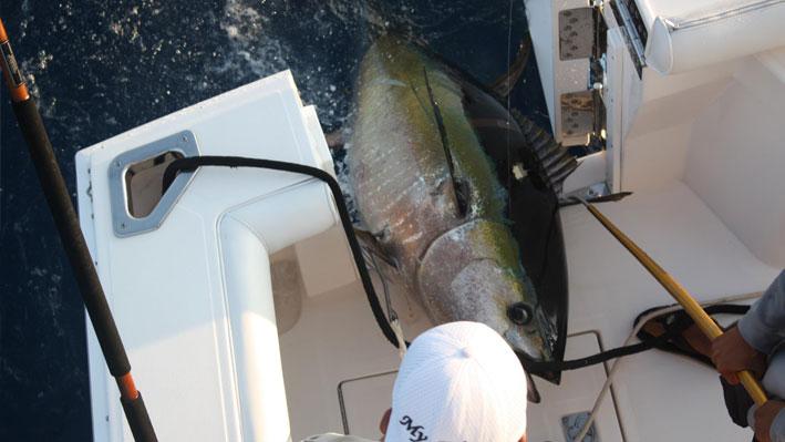 puerto-vallarta-fishing-calendar