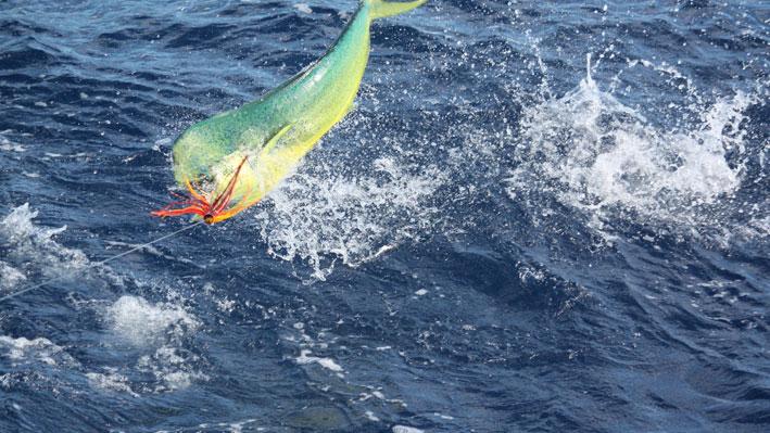 puerto-vallarta-fishing-season