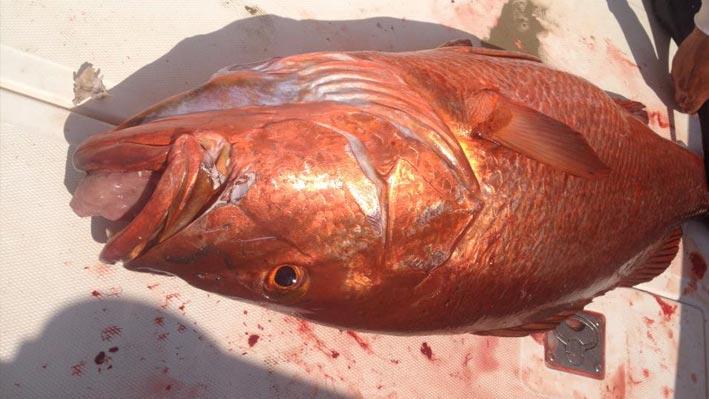puerto-vallarta-sport-fishing4