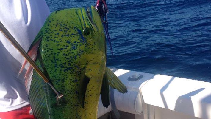 puerto-vallarta-sport-fishing7