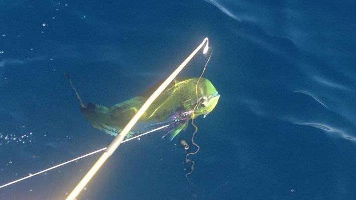 puerto-vallarta-sportfishing8
