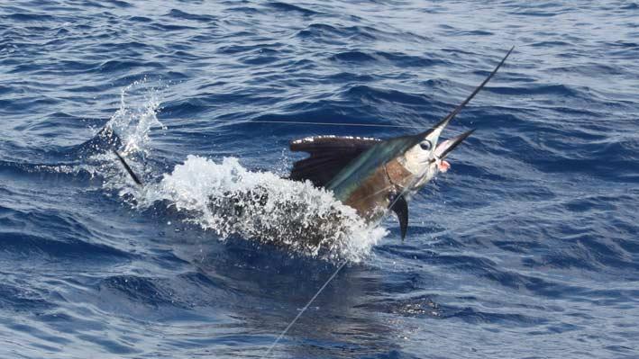 sportfishing-puerto-vallarta