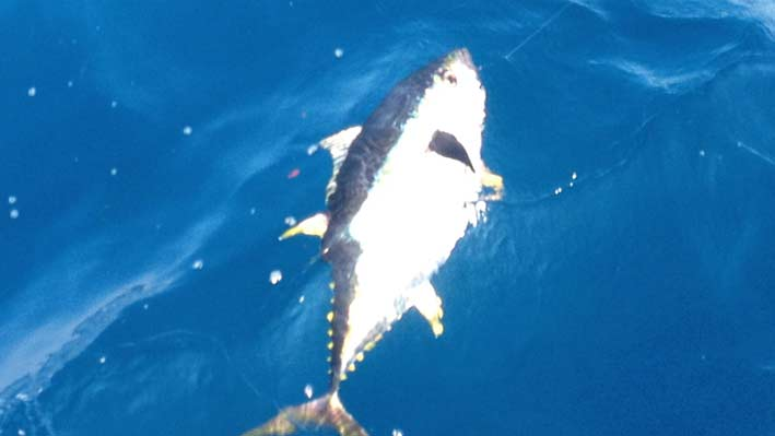 sportfishing-dorado-puerto-vallarta